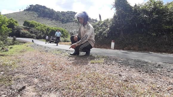 Hai cá nhân bị kỷ luật liên quan đến việc phun thuốc diệt cỏ trên quốc lộ ảnh 2