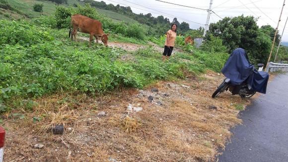 Báo cáo Tổng cục Đường bộ vụ phát quang quốc lộ bằng thuốc diệt cỏ ảnh 1