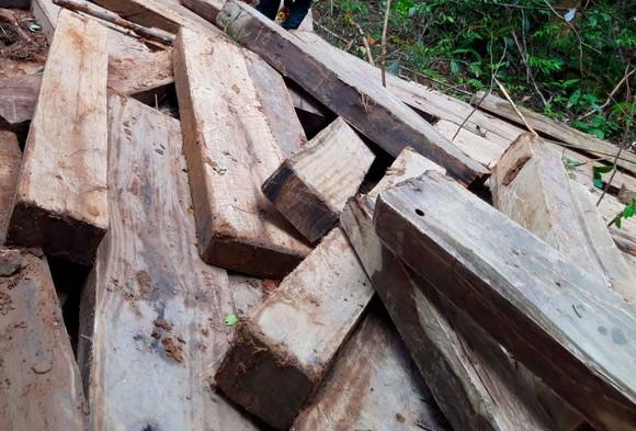 Kon Tum: Rừng già bị tàn phá, gỗ tập kết la liệt ảnh 2