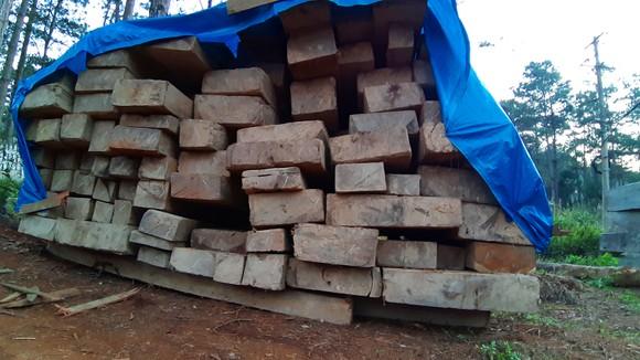 Vụ rừng già Kon Tum bị tàn phá: Tìm thấy 73 gốc cây bị cưa hạ trái phép ảnh 2