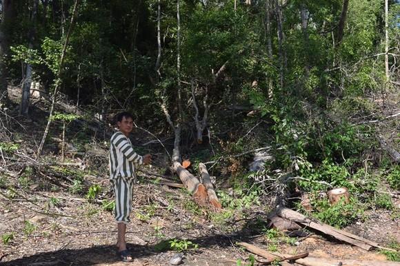 Chủ tịch tỉnh tặng bằng khen 2 cán bộ công an vì chiến tích truy bắt băng nhóm cưa hạ 103m³ gỗ  ảnh 2