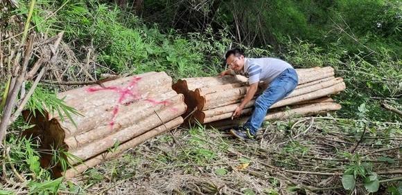 Đề nghị kiểm điểm trách nhiệm 2 ban quản lý rừng vì để phá rừng ảnh 1