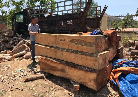 Khởi tố vụ cưa hạ trái phép 119 cây gỗ  ảnh 1