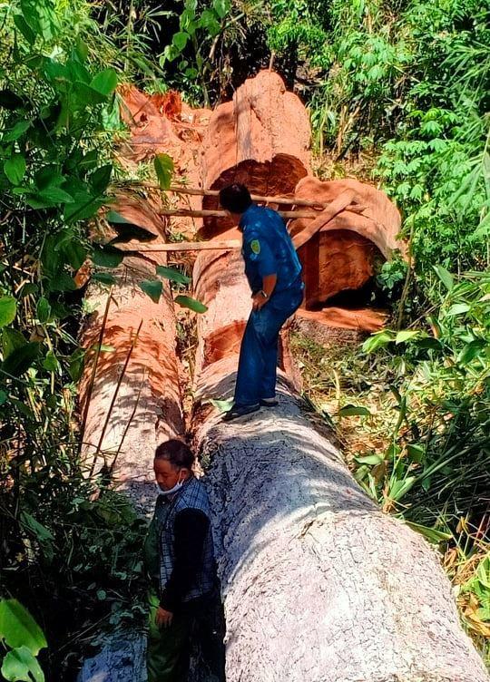 Gia Lai: Bắt 5 lâm tặc 'xẻ thịt' hơn 28m³ gỗ ảnh 1