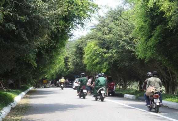 Du khách lên nghỉ mát theo từng nhóm dọc tuyến đường lên bán đảo Sơn Trà