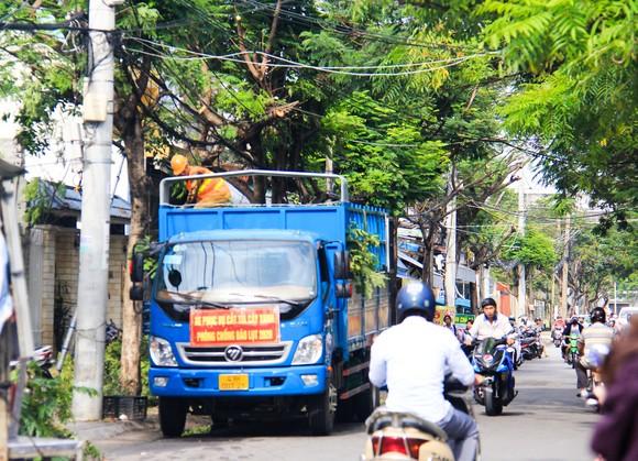 Cây xanh trên đường Nguyễn Phan Vinh (quận Sơn Trà, TP Đà Nẵng ) được cắt tỉa trước khi cơn bão số 9 đổ bộ