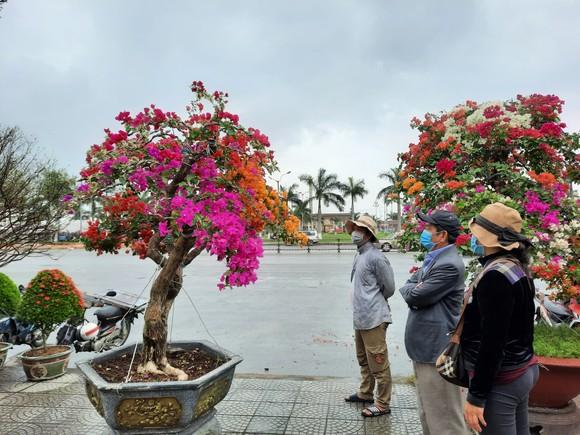 Tiểu thương chợ hoa tết ở Đà Nẵng 'nhớ' người mua ảnh 4