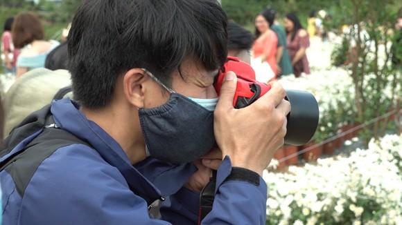 Đà Nẵng: Người dân hào hứng với vườn cúc họa mi trái mùa  ảnh 4