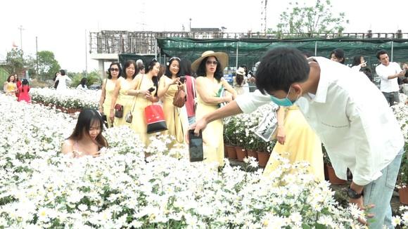 Đà Nẵng: Người dân hào hứng với vườn cúc họa mi trái mùa  ảnh 2