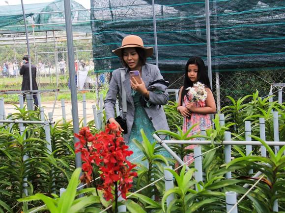 Đà Nẵng: Người dân hào hứng với vườn cúc họa mi trái mùa  ảnh 9