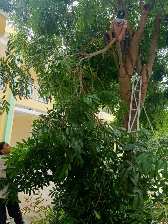 Đà Nẵng: Tạo điều kiện cho địa phương sử dụng cơ sở giáo dục làm nơi tập kết, sơ tán dân ảnh 2