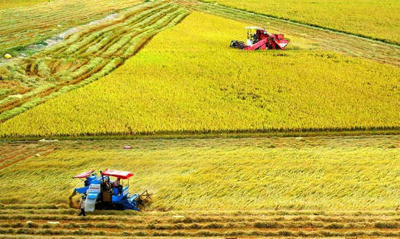 Bước chuyển nông nghiệp ĐBSCL ảnh 1