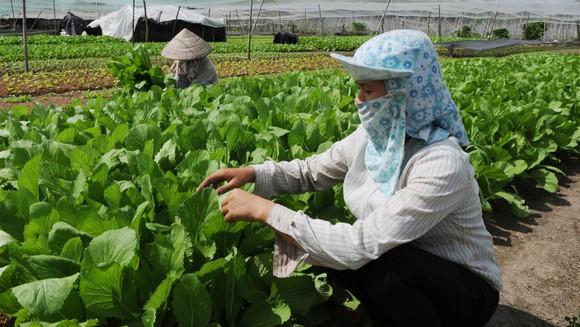 Phát triển ngành nông nghiệp thực phẩm: Gỡ nút thắt cơ chế, đầu tư hạ tầng giao thông ảnh 1
