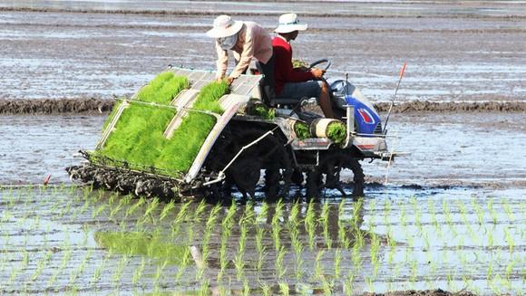 Tín hiệu tích cực từ ngành nông nghiệp ảnh 1