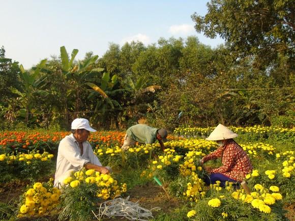 Ngập tràn sắc hoa xuân Đông Nam bộ ảnh 1