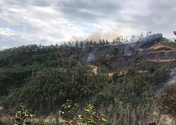 Quảng Nam: Phát hiện một người tử vong trong vụ cháy rừng keo ảnh 1