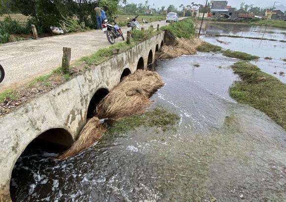 Quảng Nam: Người dân bức xúc vì nước từ bãi rác chảy ra ruộng đồng gây hôi thối  ảnh 4