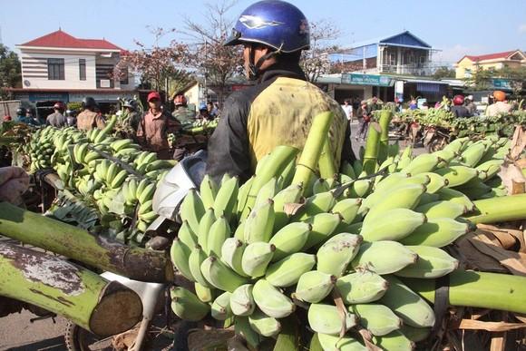 Chợ chuối mật mốc vùng biên lớn nhất miền Trung nhộn nhịp dịp cuối năm ảnh 1