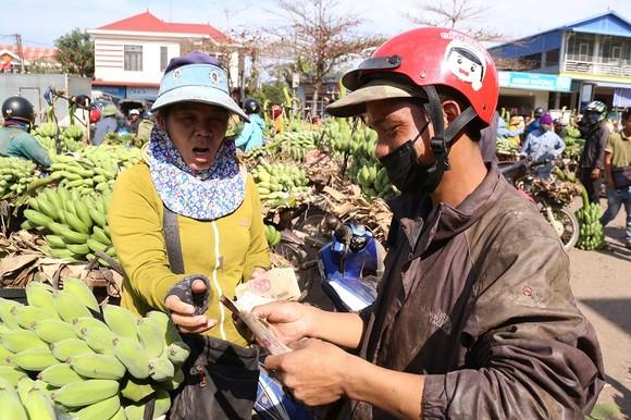 Chợ chuối mật mốc vùng biên lớn nhất miền Trung nhộn nhịp dịp cuối năm ảnh 3