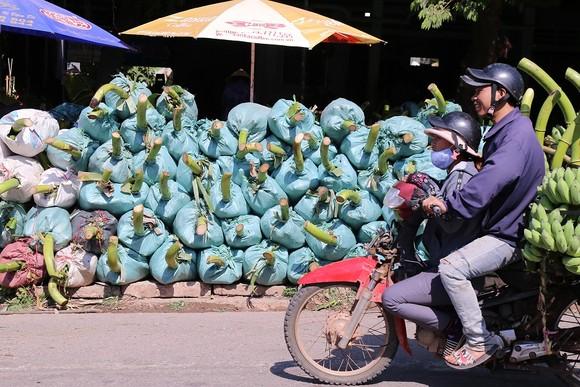 Chợ chuối mật mốc vùng biên lớn nhất miền Trung nhộn nhịp dịp cuối năm ảnh 5