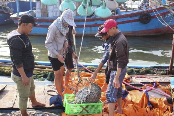 Ngư dân Quảng Trị được mùa cá cơm sau Tết Nguyên đán ảnh 3