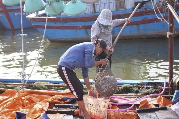 Ngư dân Quảng Trị được mùa cá cơm sau Tết Nguyên đán ảnh 6