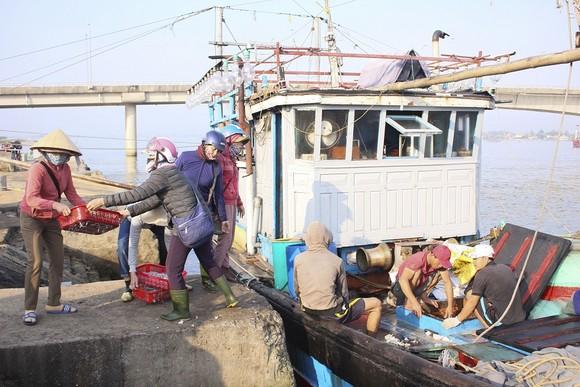 Ngư dân Quảng Trị được mùa cá cơm sau Tết Nguyên đán ảnh 1