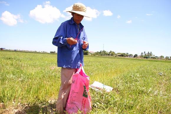 Trồng dưa hấu trên đất lúa mùa khô hạn cho thu nhập cao ảnh 3