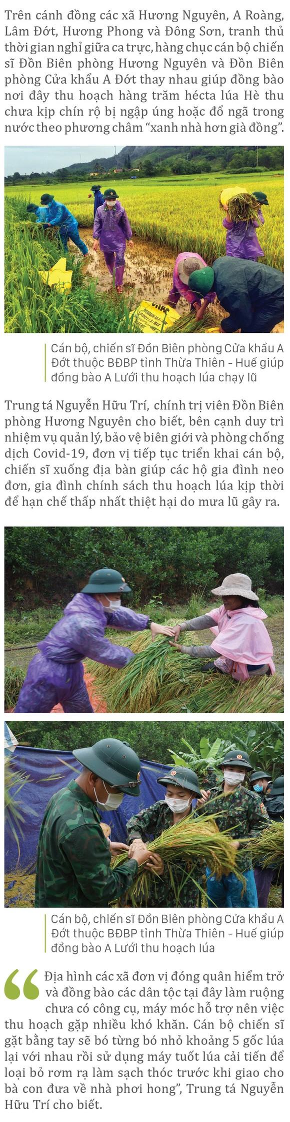 Nông dân miền Trung dầm mình cứu lúa sau mưa bão  ảnh 17