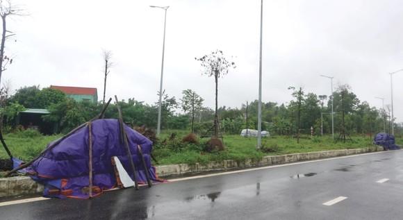 Nông dân miền Trung dầm mình cứu lúa sau mưa bão  ảnh 22