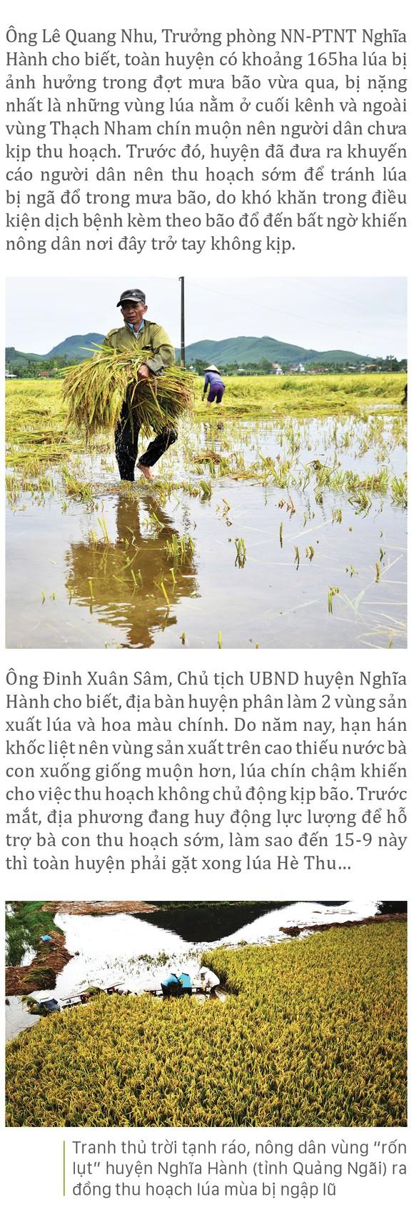 Nông dân miền Trung dầm mình cứu lúa sau mưa bão  ảnh 36