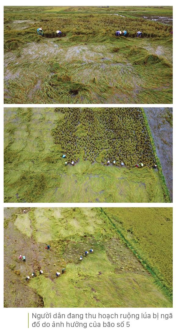 Nông dân miền Trung dầm mình cứu lúa sau mưa bão  ảnh 5