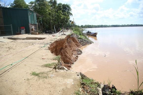 Quảng Trị: Bất an vì bờ sông sạt lở nghiêm trọng ảnh 1