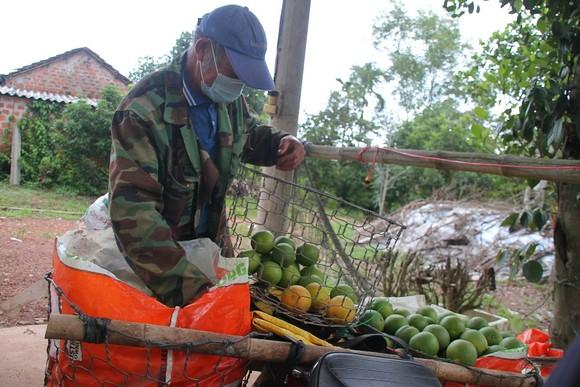 Nông dân Quảng Trị tìm đầu ra cho trái cam ảnh 2