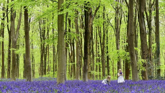 Nước Anh sẽ trồng cây gấp ba lần trong ba năm tới để chống lại biến đổi khí hậu ảnh 1