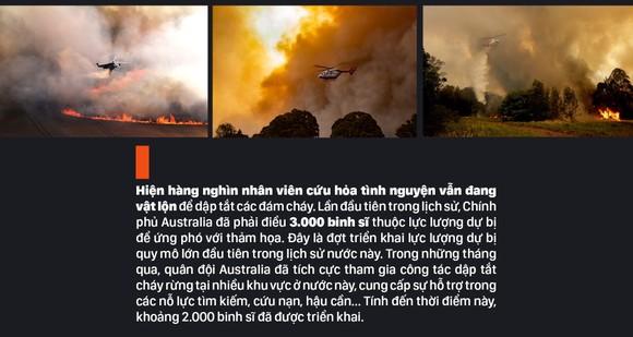 Australia 'oằn lưng' chống chọi thảm họa cháy rừng ảnh 16