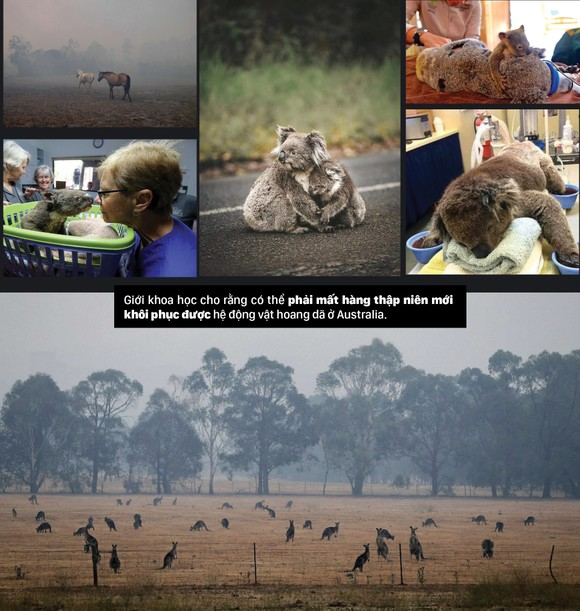 Australia 'oằn lưng' chống chọi thảm họa cháy rừng ảnh 9