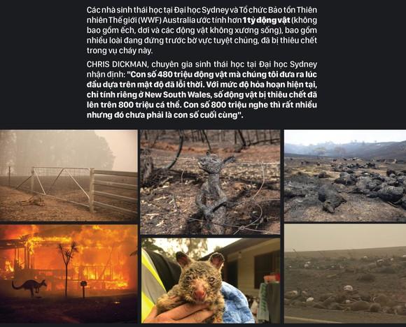 Australia 'oằn lưng' chống chọi thảm họa cháy rừng ảnh 8