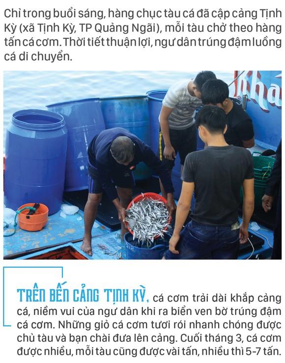 Ngư dân Quảng Ngãi trúng đậm cá cơm ảnh 1