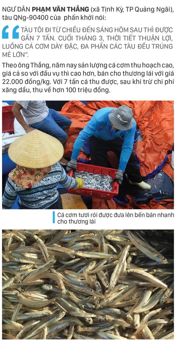 Ngư dân Quảng Ngãi trúng đậm cá cơm ảnh 4