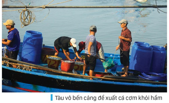 Ngư dân Quảng Ngãi trúng đậm cá cơm ảnh 5