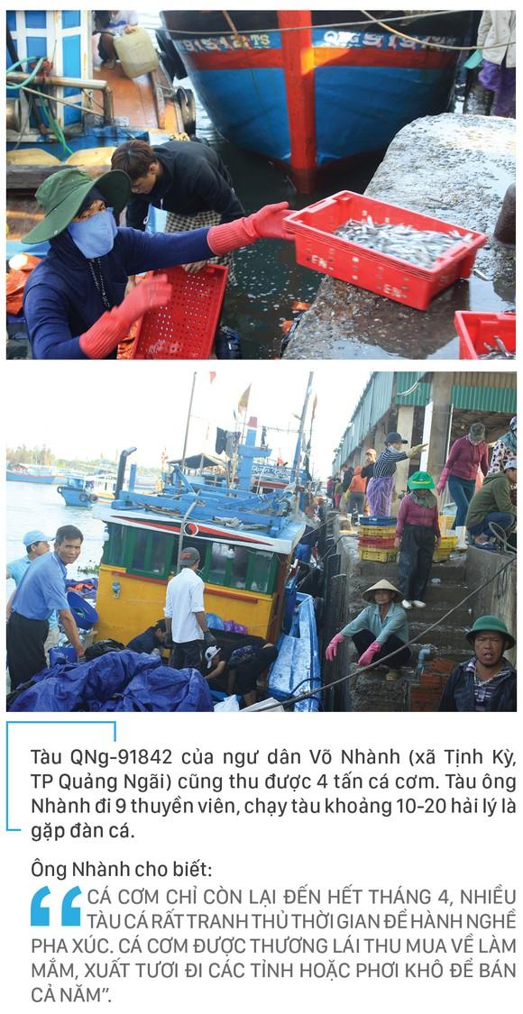 Ngư dân Quảng Ngãi trúng đậm cá cơm ảnh 8