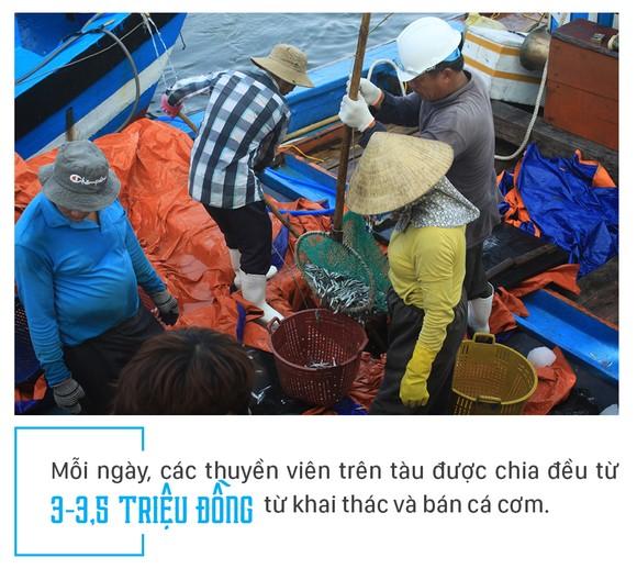 Ngư dân Quảng Ngãi trúng đậm cá cơm ảnh 9