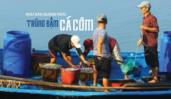 Ngư dân Quảng Ngãi trúng đậm cá cơm