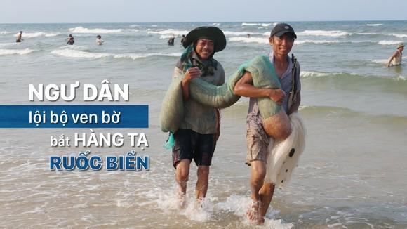 Ngư dân lội bộ ven bờ bắt hàng tạ ruốc biển