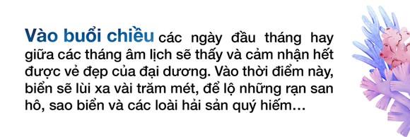 Ngắm san hô mùa nước cạn ở Quảng Ngãi ảnh 10