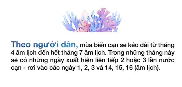 Ngắm san hô mùa nước cạn ở Quảng Ngãi ảnh 14