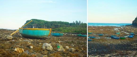 Ngắm san hô mùa nước cạn ở Quảng Ngãi ảnh 17