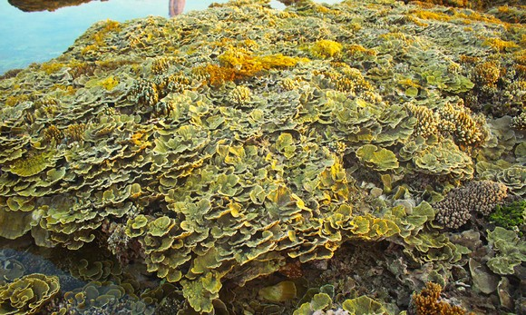 Ngắm san hô mùa nước cạn ở Quảng Ngãi ảnh 6