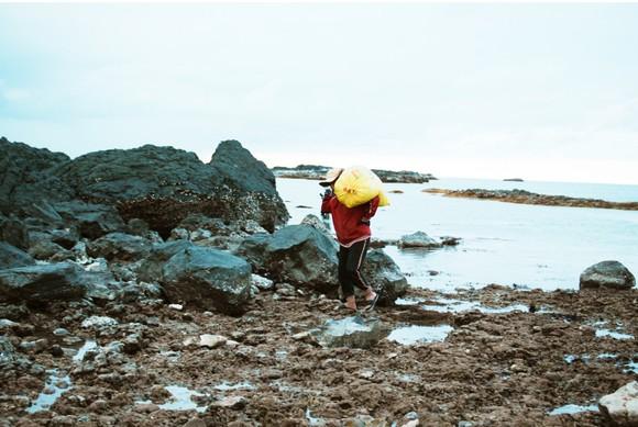 Vẻ đẹp của rong mơ biển trong mùa thu hoạch ảnh 18